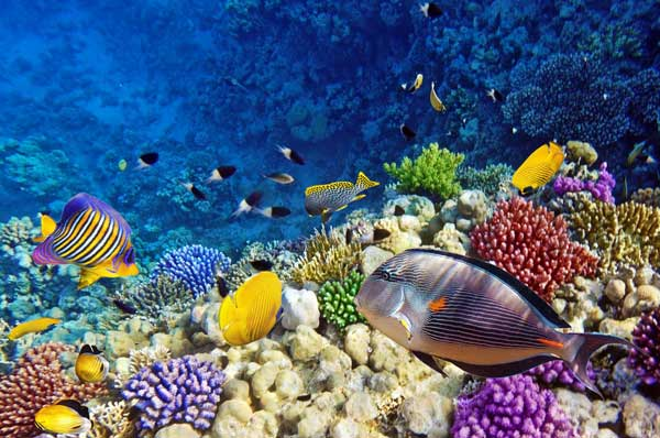 Coral reefs support 25 per cent of marine species in a complex ecosystem. Photo The Borneo Post.