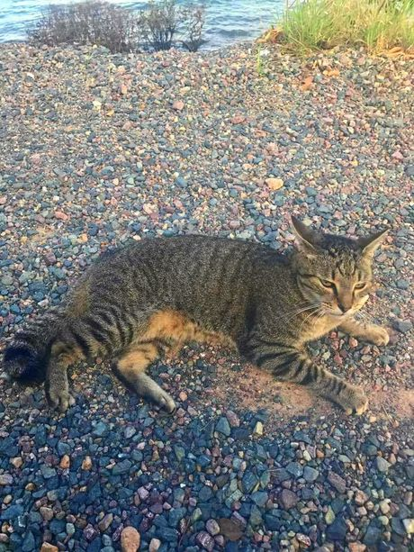 Sharkie the cat was found at Shute Harbour near boats that had been washed ashore after Cyclone Debbie. Photo Whitsunday Times.