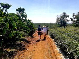 Francis Joyon visited tea producers in Vietnam