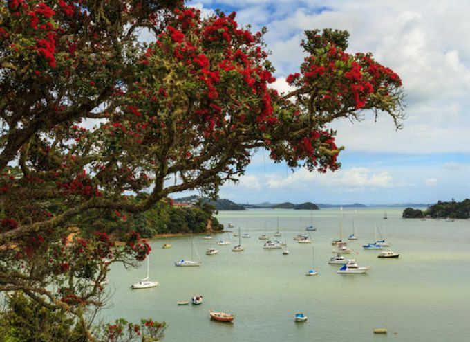 The yacht's crew have all tested negative for Covid-19 since arriving in Opua. Image: RNZ/123RF.