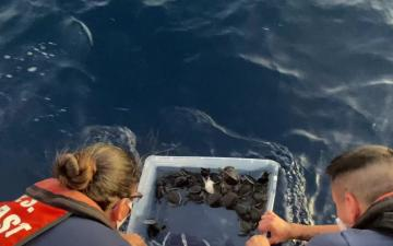 Turtle release. Photo USCG.