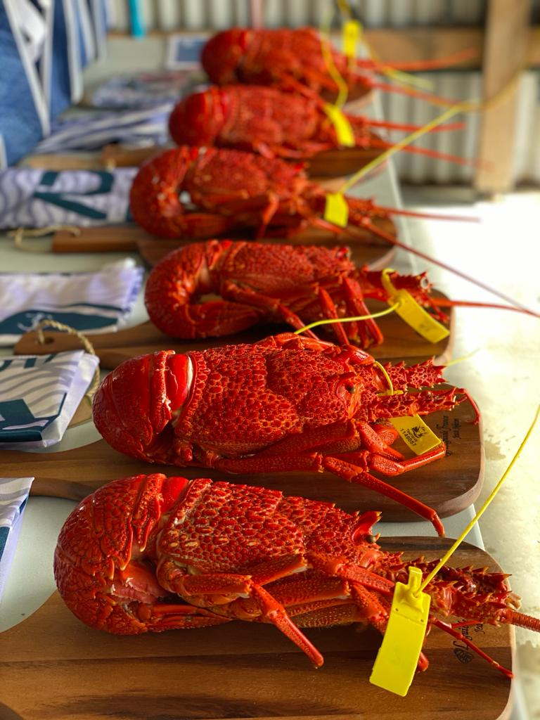 To the winners go large crayfish - pic courtesy ORCV - King Island Race.j