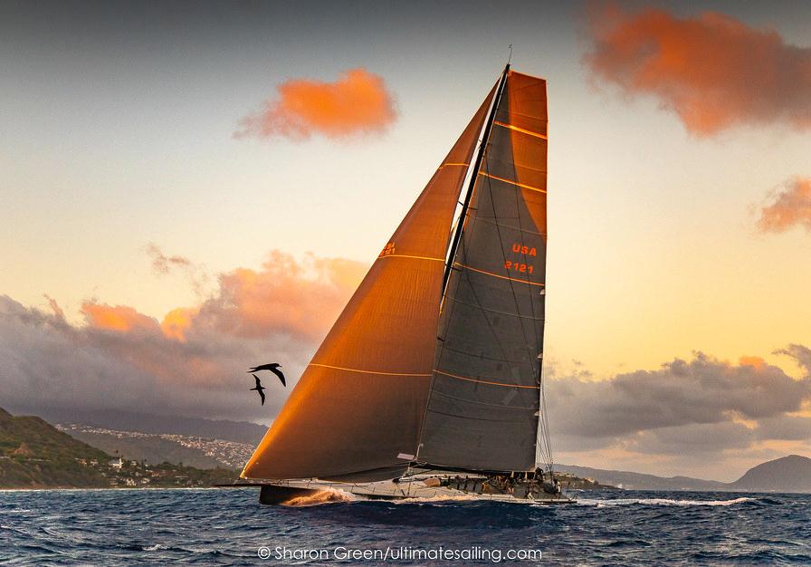 Sea birds greet a yacht in 2019 transpac race