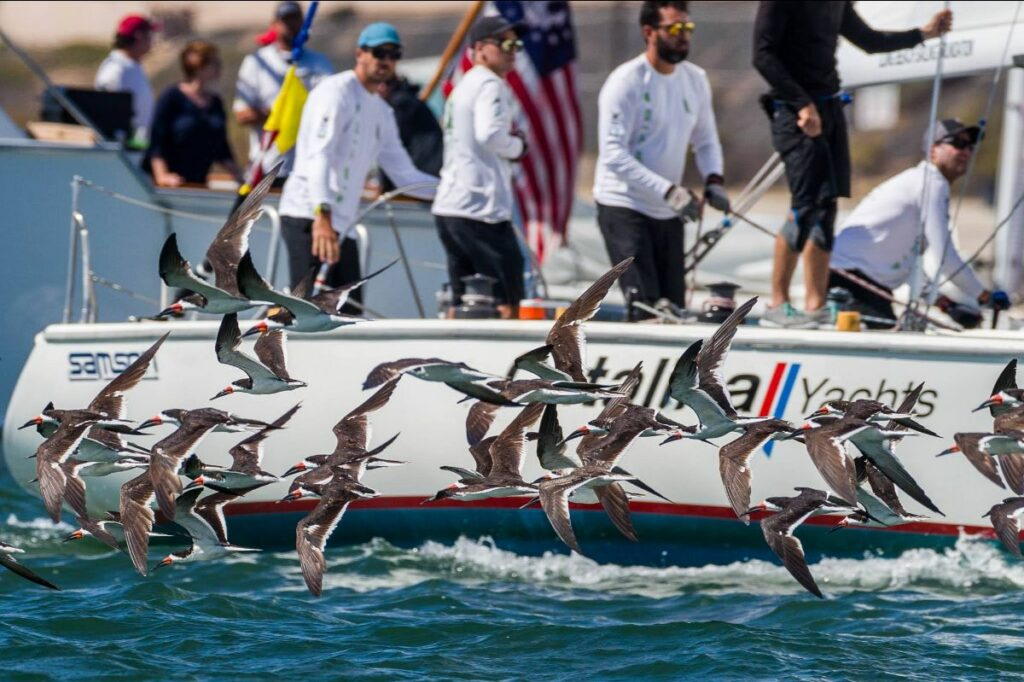 Sea birds next to Chris Poole and crew standing while sailing.